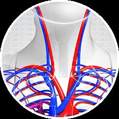 vascularsp-doencas-acessos-vasculares