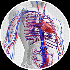vascularsp-doencas-doencas-arteriais