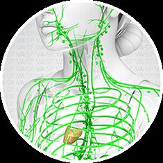 vascularsp-doencas-doencas-linfaticas